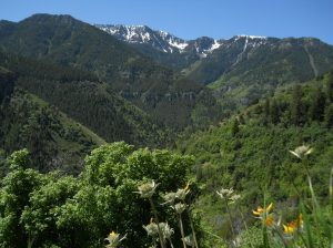 photo of Logan Canyon (a few miles from campus) by L. Lucas